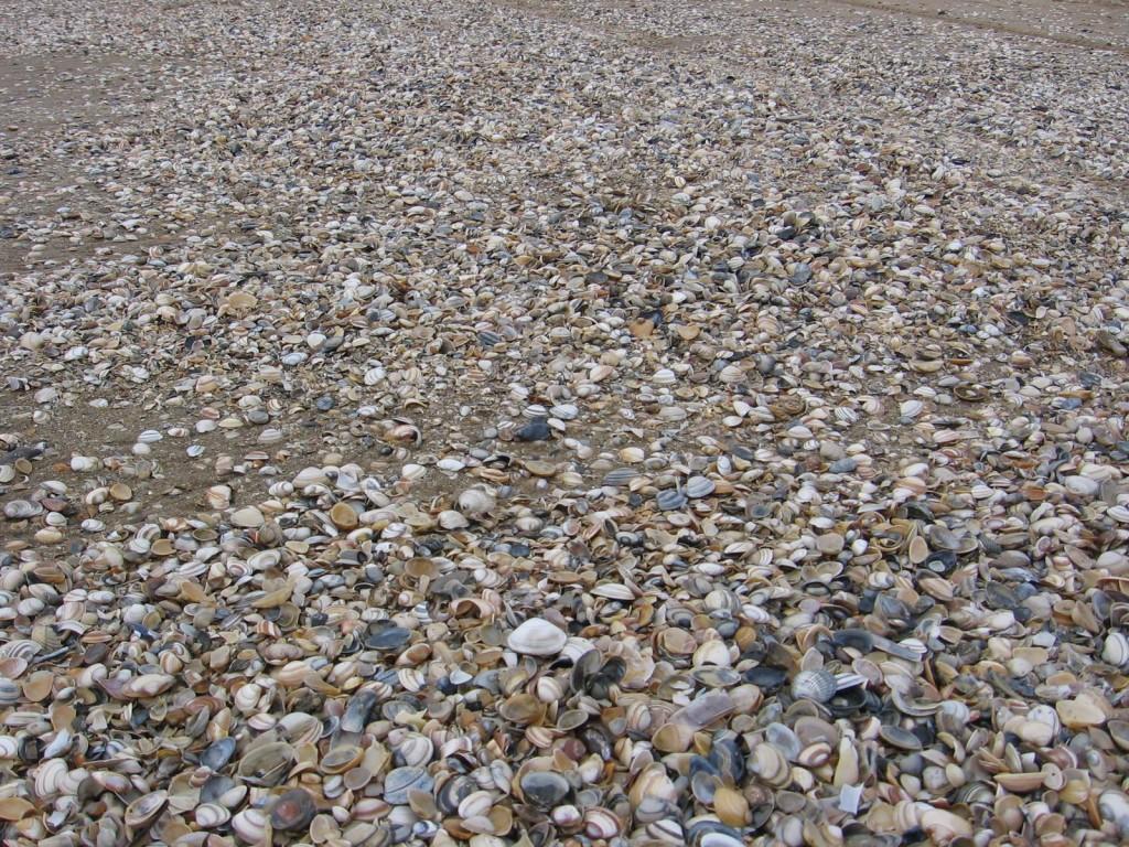 Scheveningen paplūdimys